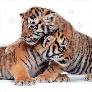 Zuckerman_creatures_puzzle_tiger