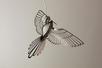 Homminbird2